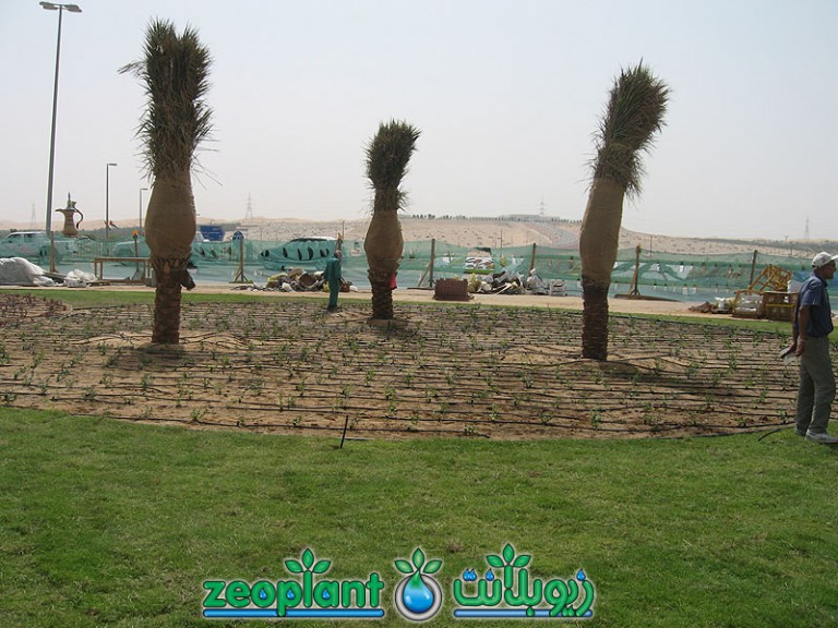 Liwa Roundabout – Western Region
