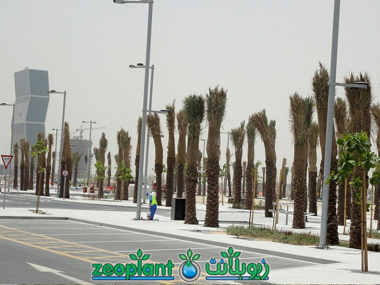 Lusail – Phase 1a Road Media – Qatar 2012