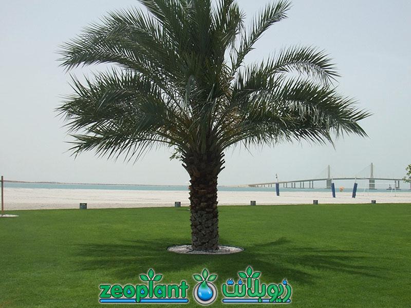 Hudariyat Bateen Beach Park