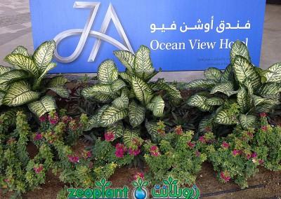 Ocean View Hotel Jumeirah Beach Residence