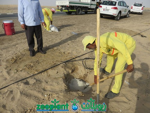 Tree Plantation Sheikh Zayed Rd & Al Qudra Rd