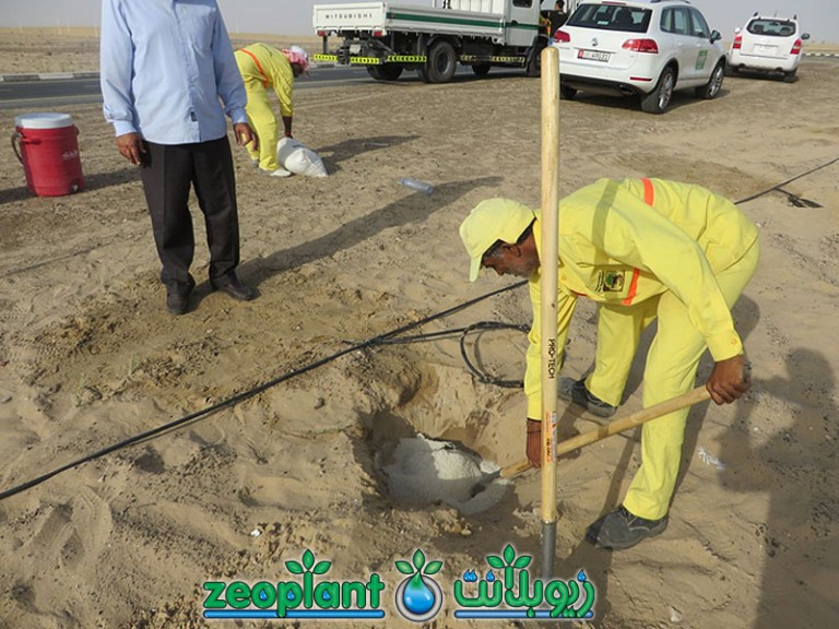 Tree Plantation Sheikh Zayed Rd & Al Qudra Rd