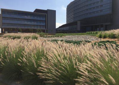 Mafraq Hospital Abu Dhabi – 2016